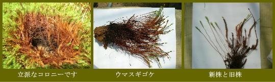 02umasugi_1.jpg
